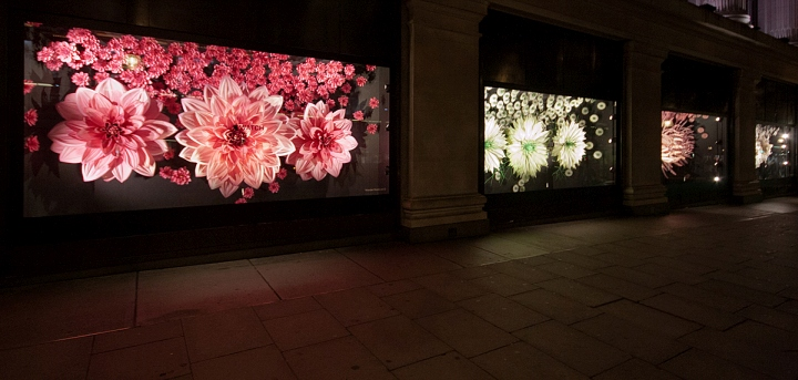 Selfridges-Windows-2015-Fall-London-UK-16